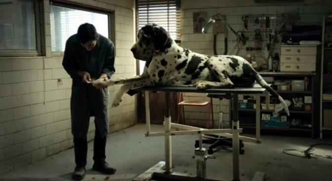 dogman-garrone-1200x520-e1526553050612